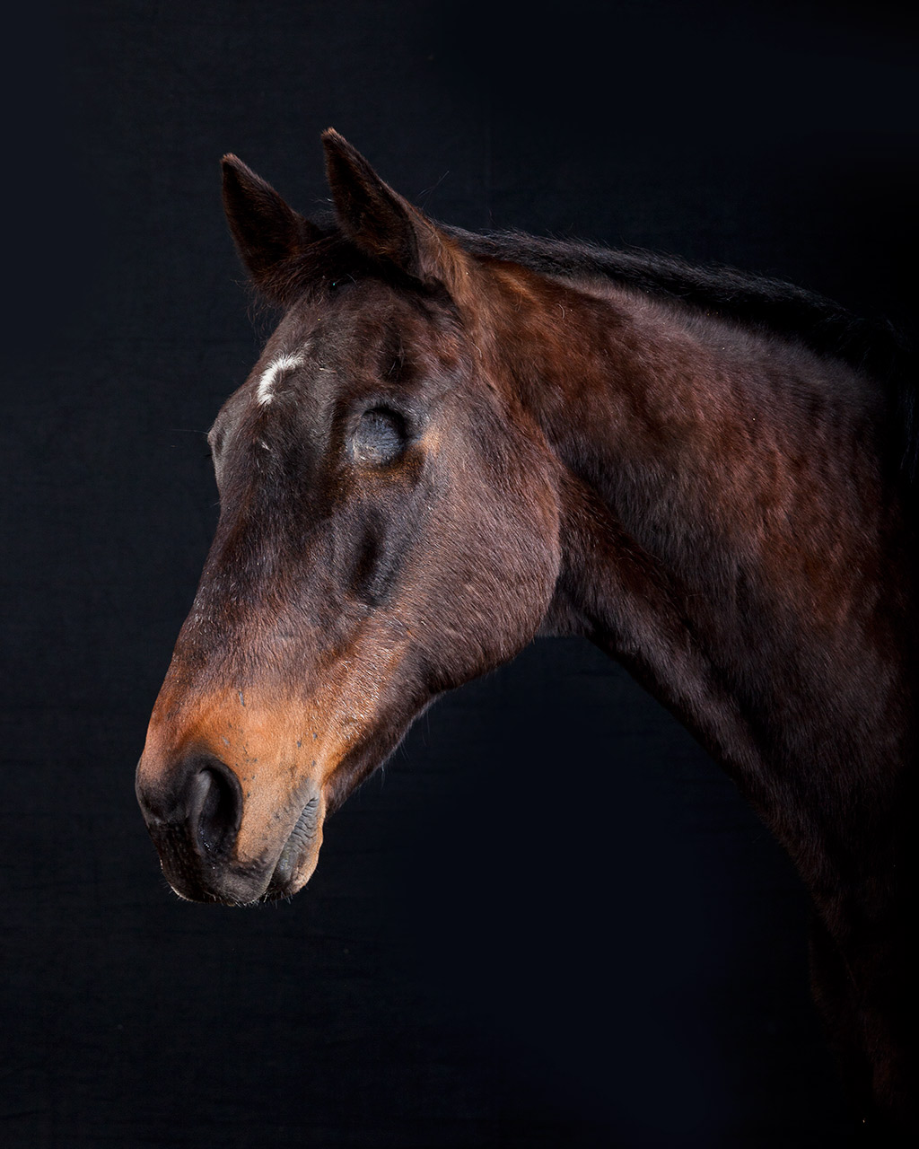Blind horse fine art photograph by animal photographer, Peter Samuels