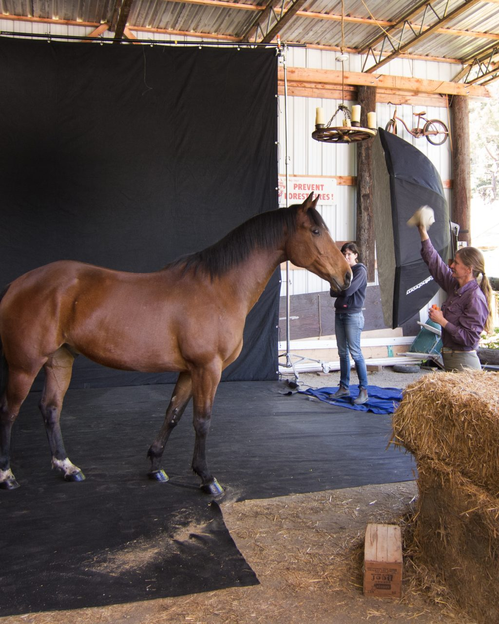 Behind the scenes of an equine photo shoot at Square Peg, a rescue horse ranch.