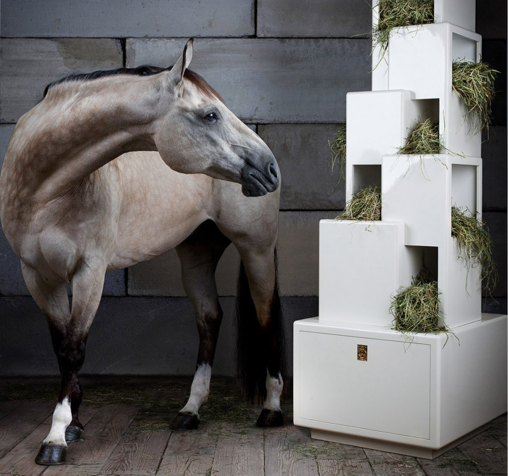 Equine Fine Art Photograph of Bugs the Horse For Coup Detat.