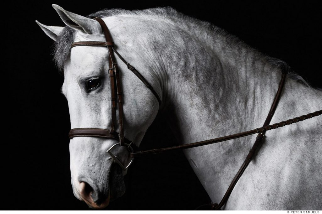 Hunter Jumper Dressage fine art photograph by San Francisco based photographer, Peter Samuels.