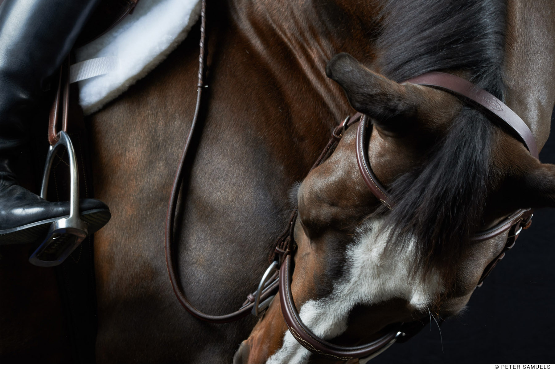 "With this fine art equine photograph, I was named Artist of the Year for the Menlo Charity Horse Show. This image of Michael with rider is called ""ready when you are"""
