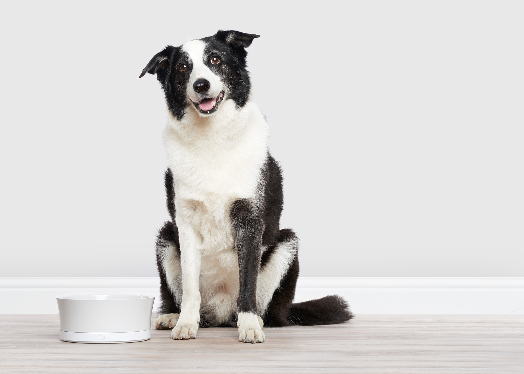 ObeDog smart dog food bowl. A commercial animal project by SF based photographer, Peter Samuels.