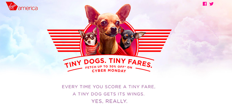 Chihuahuas photographed for Virgin America ASPC promotion.